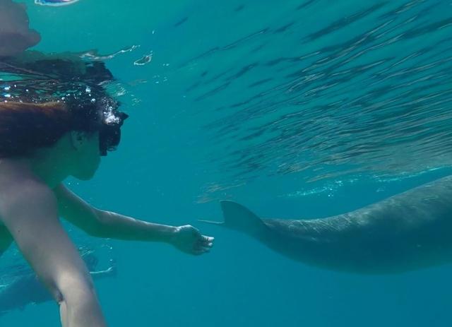 dugong coron palawan